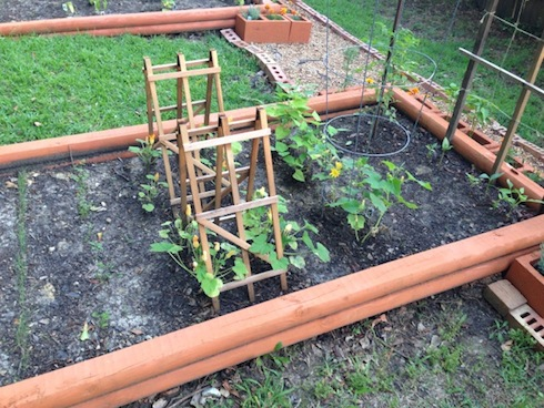 The addition of angled trellises for the squash and zucchini.